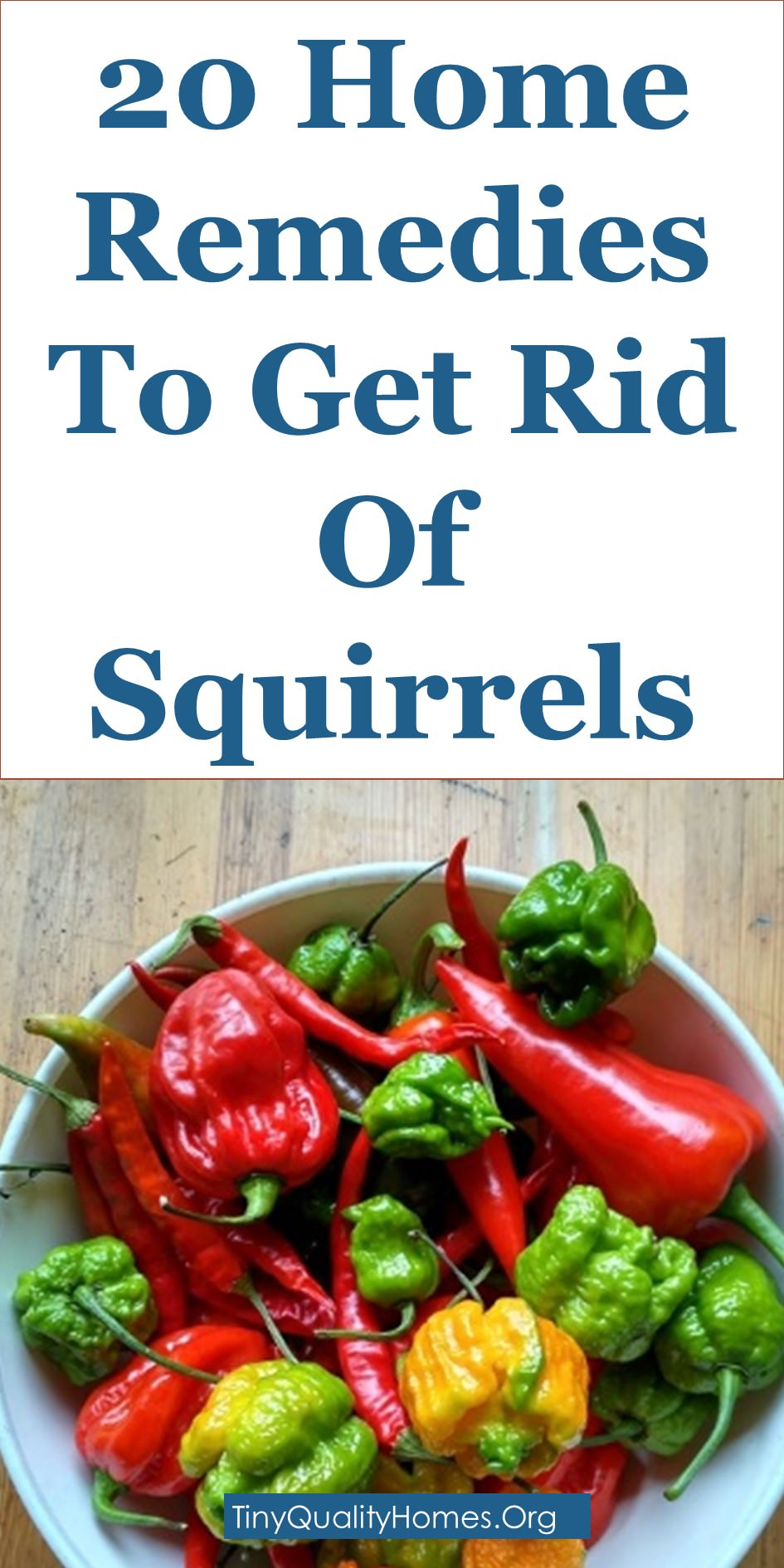 20 Home Remedies Squirrel Repellents To Get Rid Of Squirrels for dimensions 945 X 1890