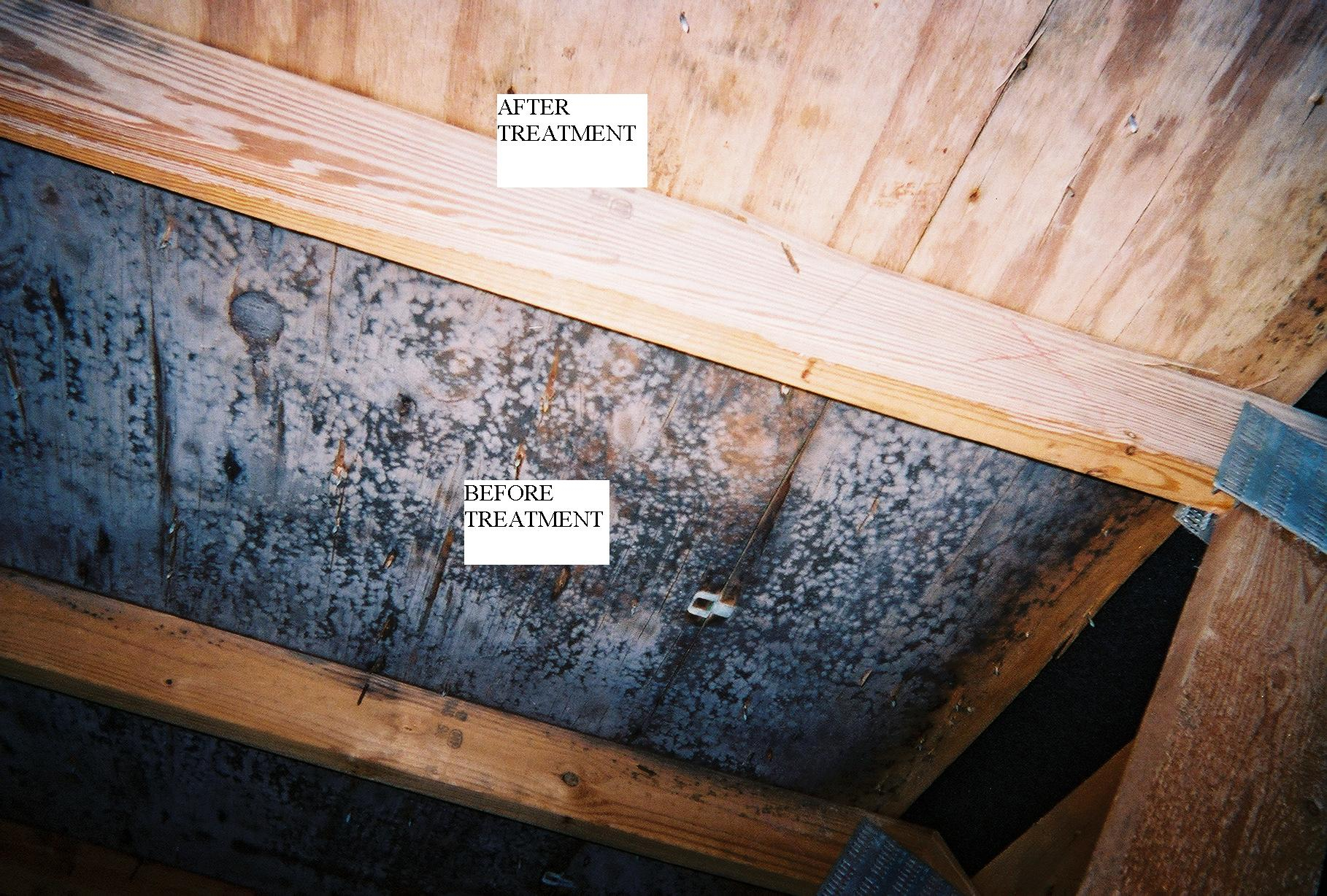 White Powder Mold Attic Attic Ideas