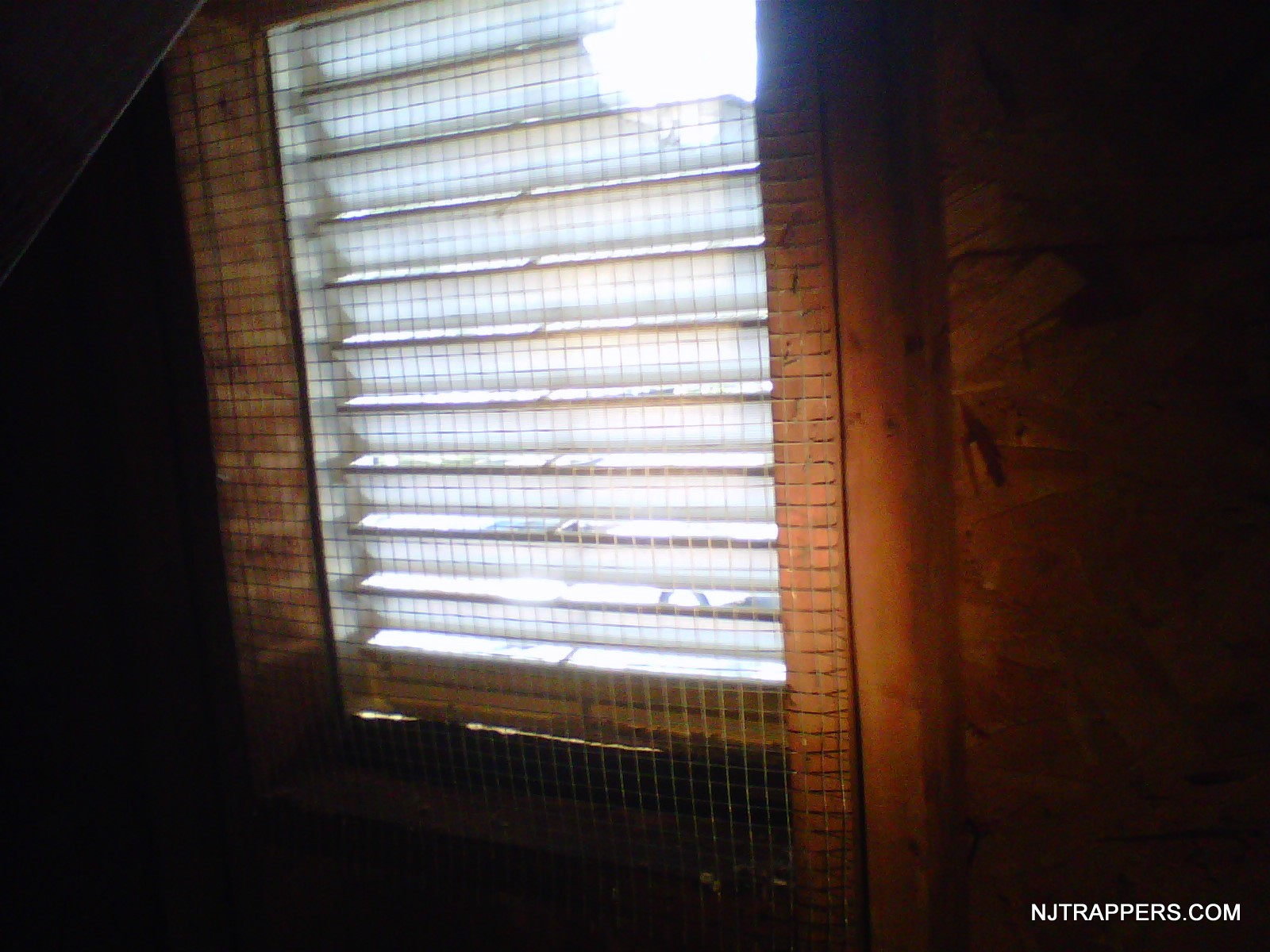 Nj Trappers Attic And Gable Vent Screens inside dimensions 1600 X 1200